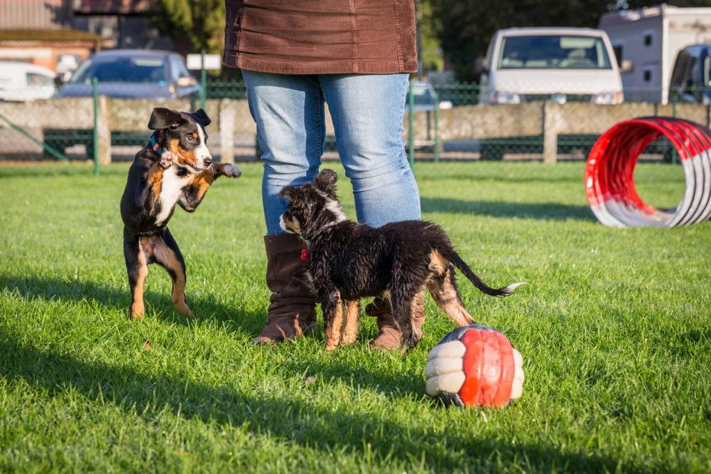 Afflgemse hondenschool-5473 - Copy
