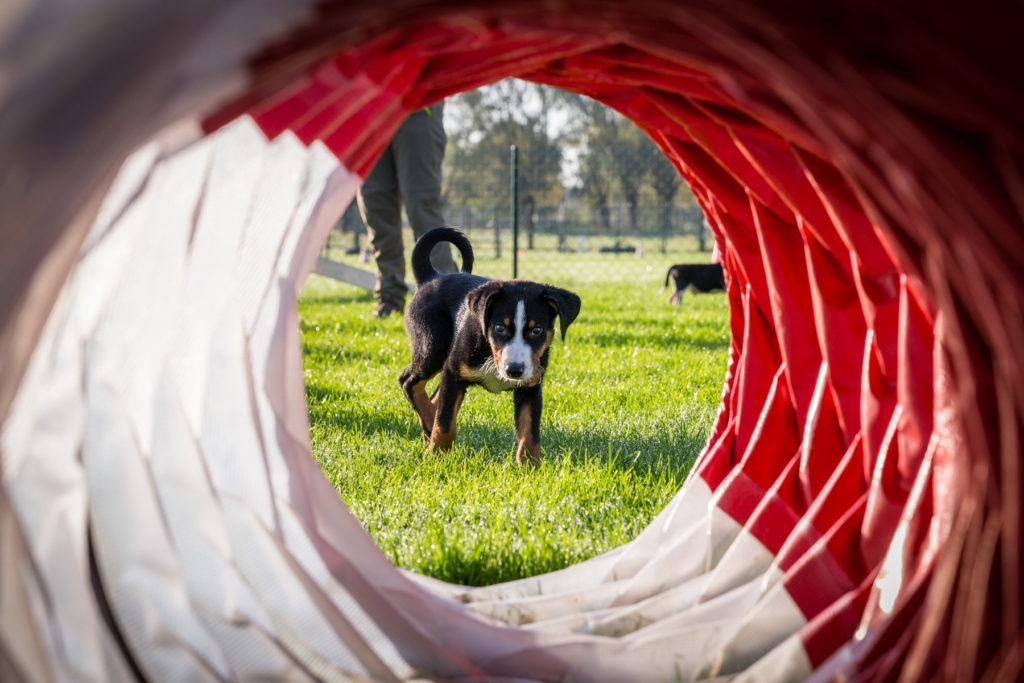 Afflgemse hondenschool-5508 - Copy