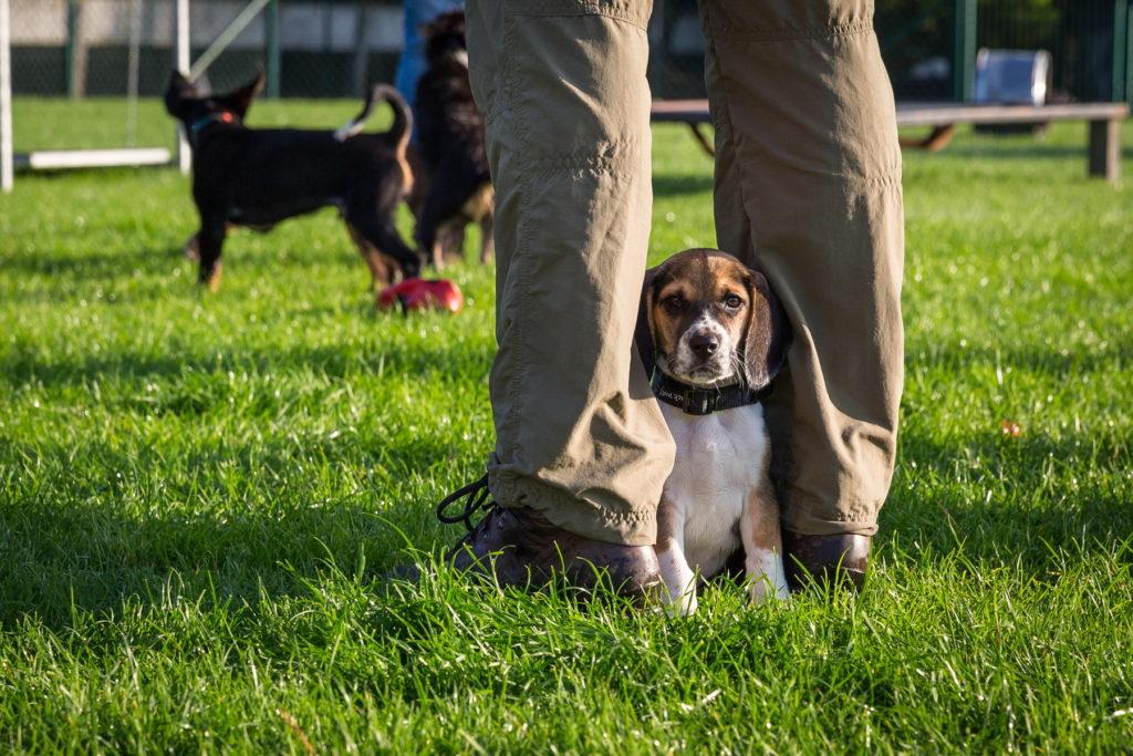 Afflgemse hondenschool-5516 - Copy