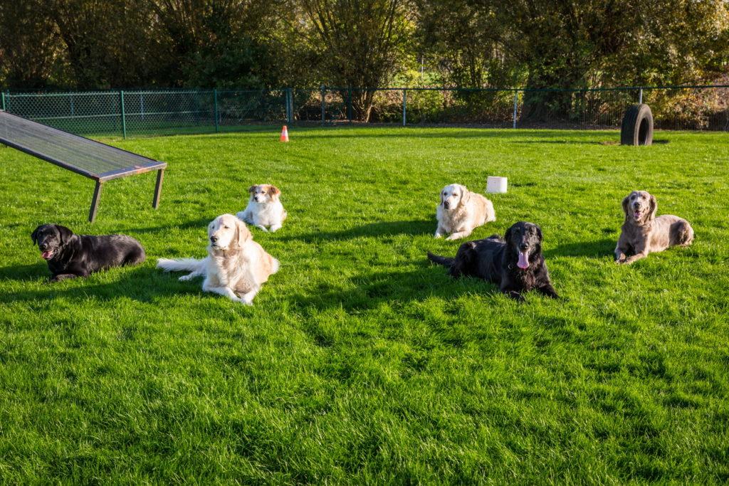 Afflgemse hondenschool-5535 - Copy