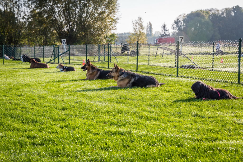 Afflgemse hondenschool-5550 - Copy