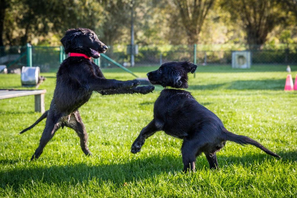 Afflgemse hondenschool-5557 - Copy