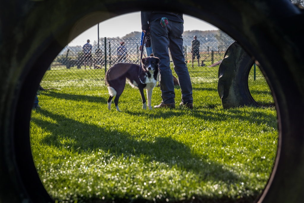 Afflgemse hondenschool-5576 - Copy