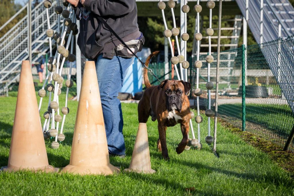 Afflgemse hondenschool-5582 - Copy