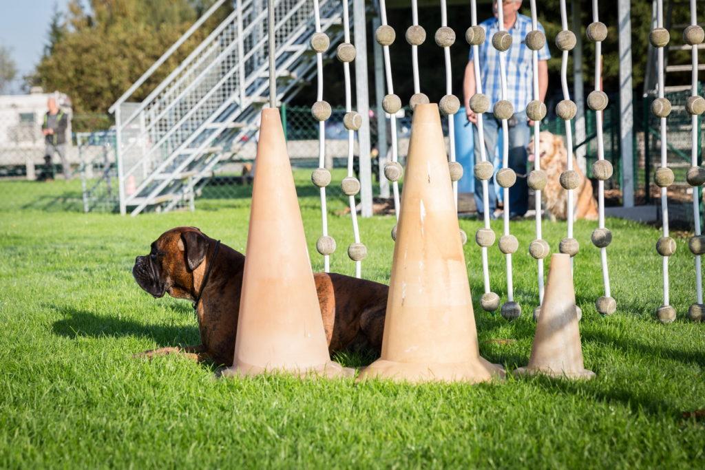 Afflgemse hondenschool-5583 - Copy