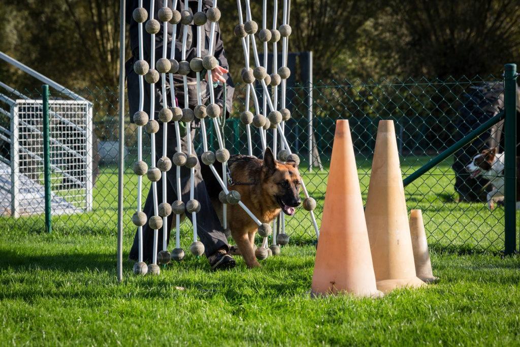 Afflgemse hondenschool-5588 - Copy