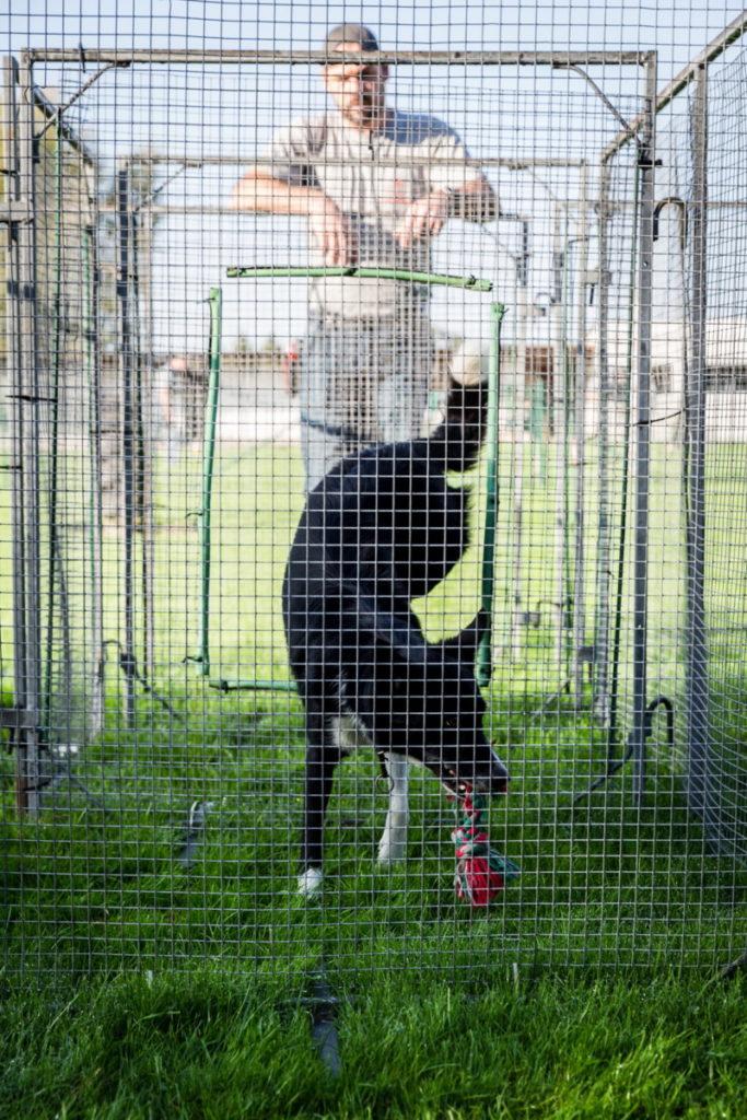 Afflgemse hondenschool-5596 - Copy