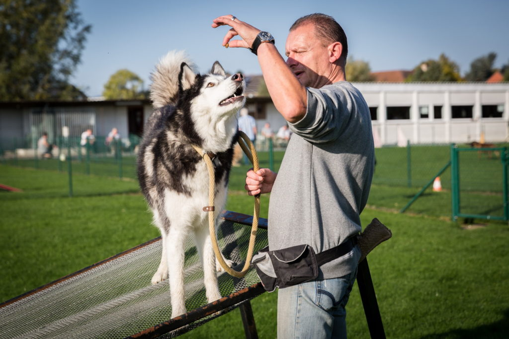 Afflgemse hondenschool-5621 - Copy