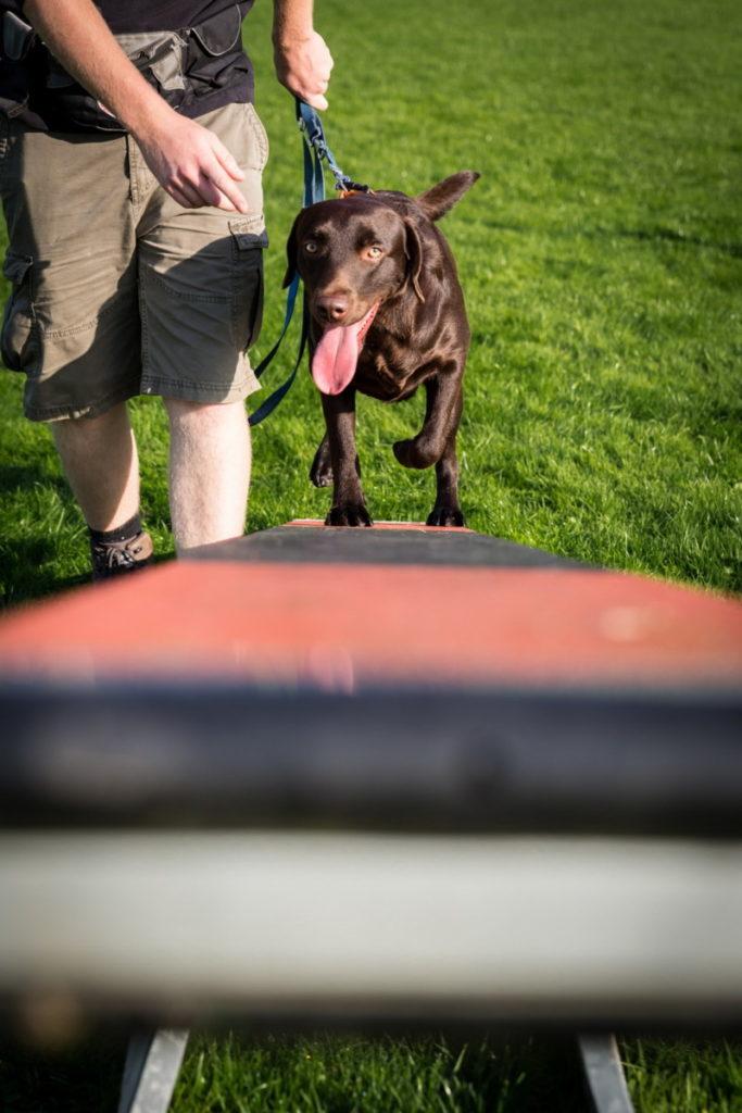 Afflgemse hondenschool-5633 - Copy
