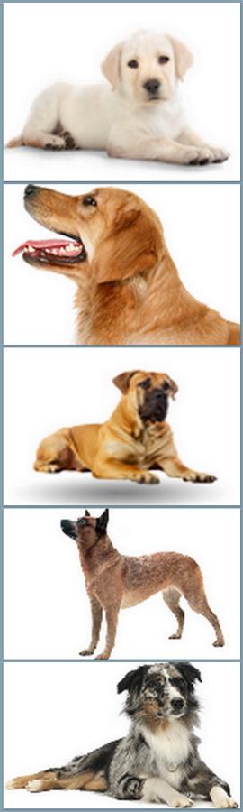 hondenschool1b