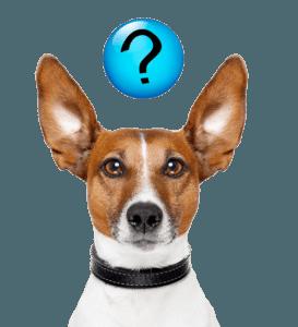 Hond-veel-gestelde-vragen-e1492966685924